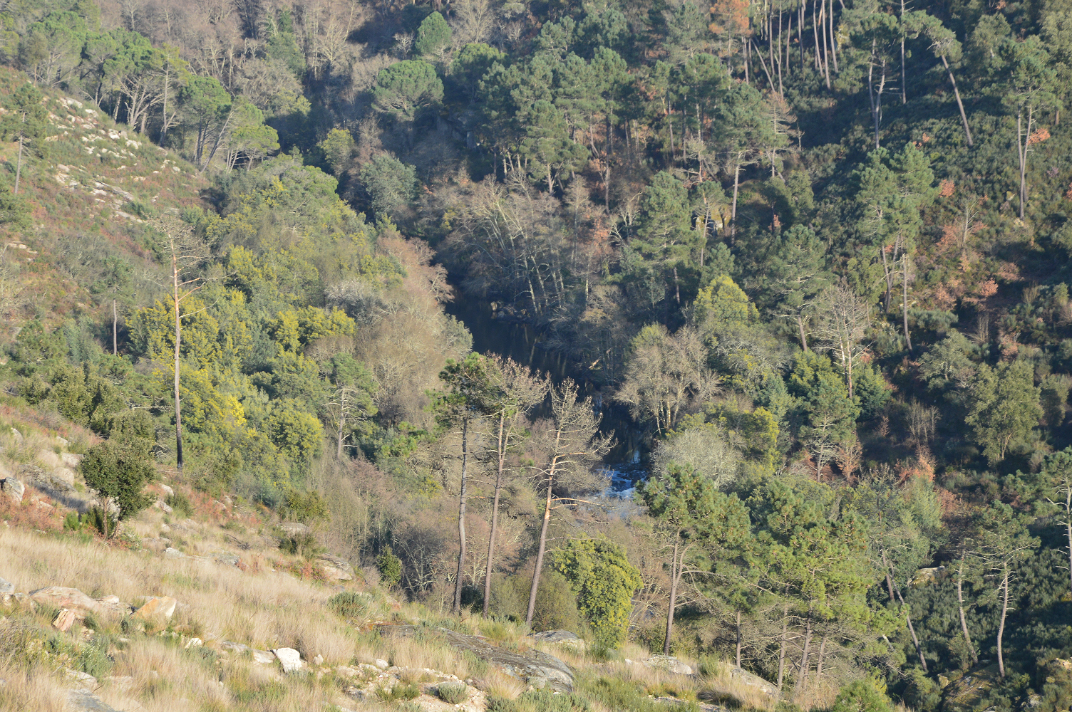 Plano Nacional de Barragens: Alvito e Girabolhos canceladas; Fridão suspensa