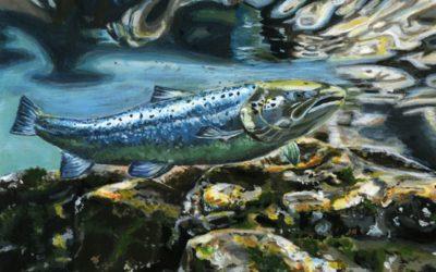 Fish Migration Award